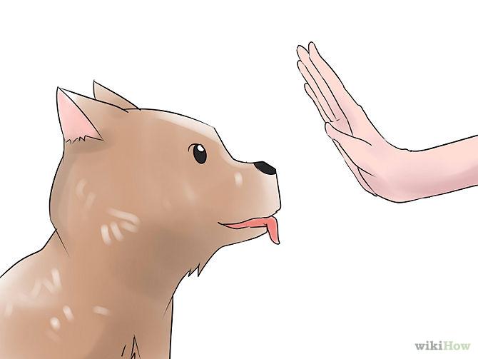 670px-Teach-Your-Dog-Basic-Commands-Step-2